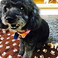 Adopt A Pet :: Nahla:Gentle Girl! (NJ) - Spring City, TN