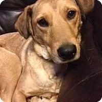 Adopt A Pet :: Ruthie - E. Greenwhich, RI