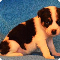 Adopt A Pet :: **FRANCISCO** meet July 8th! - Mukwonago, WI