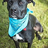 Adopt A Pet :: Luke - Fort Valley, GA