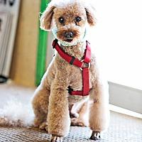 Adopt A Pet :: Marley - Fallbrook, CA