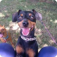 Adopt A Pet :: Chanel - Pelzer, SC