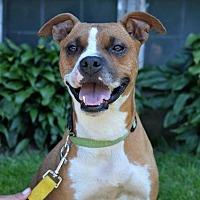 Adopt A Pet :: Charlotte - Danbury, CT