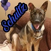 Adopt A Pet :: Schultz - Hesperia, CA
