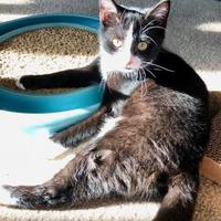 Adopt A Pet :: Nova - Franklin, IN