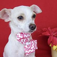Adopt A Pet :: Minty - Irvine, CA