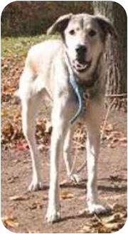 Husky Mix Dog for adoption in Oxford, Michigan - Gracie