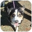 Photo 3 - Australian Shepherd Dog for adoption in Orlando, Florida - Layla