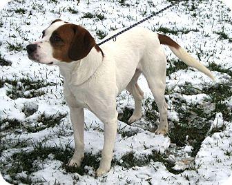 Beagle Mix Dog for adoption in LaGrange, Kentucky - RASCAL
