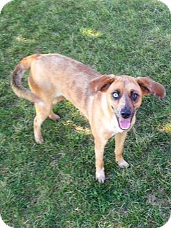 Australian Cattle Dog Mix Dog for adoption in Indianola, Iowa - Jade