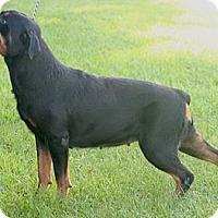 Adopt A Pet :: Hanna - Alachua, GA