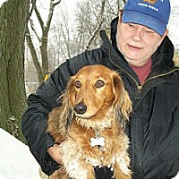 Adopt A Pet :: Snickers - West Bloomfield, MI