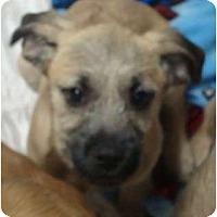 Adopt A Pet :: Fred Jones - scooby litter - Phoenix, AZ