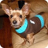 Adopt A Pet :: Gizzy - Southern Pines, NC