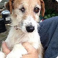 Adopt A Pet :: Duchess~HELP! - Adamsville, TN