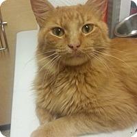 Adopt A Pet :: Petey - West Dundee, IL