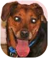 Hound (Unknown Type) Mix Dog for adoption in Eatontown, New Jersey - Darby