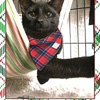 Adopt A Pet :: Hansen - East Brunswick, NJ