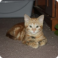 Adopt A Pet :: Tater (LE) - Little Falls, NJ