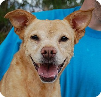 Mixed Breed (Medium) Mix Dog for adoption in Las Vegas, Nevada - Cassie
