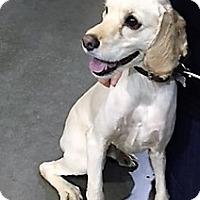 Adopt A Pet :: Frisby-ADOPTED - Sacramento, CA
