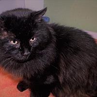 Adopt A Pet :: Chevy - Muskegon, MI