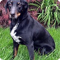 Adopt A Pet :: Hope - Bridgeton, MO