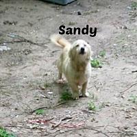 Terrier (Unknown Type, Medium) Mix Dog for adoption in Malvern, Arkansas - SANDY