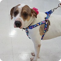 Adopt A Pet :: Minnie - Woodbridge, VA