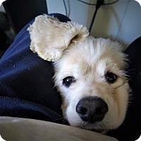 Adopt A Pet :: Genki - Santa Barbara, CA