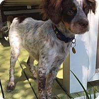 Adopt A Pet :: *COURTESY LISTING Shaun - Los Angeles, CA