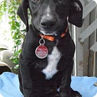 Adopt A Pet :: Cuba - Wallis, TX