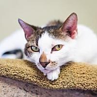 Adopt A Pet :: Max - Palm Springs, CA