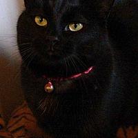 Adopt A Pet :: Bowes - McPherson, KS