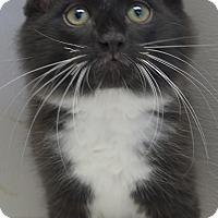 Adopt A Pet :: Pongo - Manning, SC