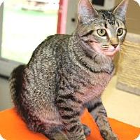 Adopt A Pet :: Dorie - Cottageville, WV
