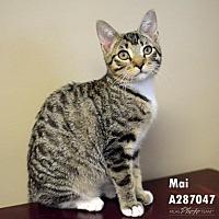Adopt A Pet :: MAI - Conroe, TX