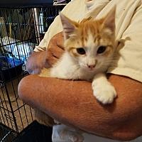 Adopt A Pet :: Jasper - Cardwell, MT