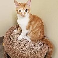 Adopt A Pet :: Kramer - Edmond, OK