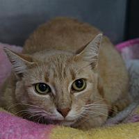 Adopt A Pet :: Henrick - New Milford, CT