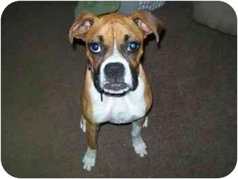 Boxer Mix Dog for adoption in Thomasville, Georgia - Ladybug