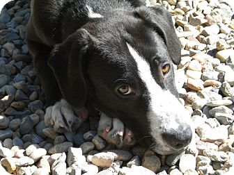 Hound (Unknown Type) Mix Puppy for adoption in Santa Fe, New Mexico - LuLu