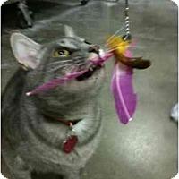 Adopt A Pet :: Al - Greenville, SC