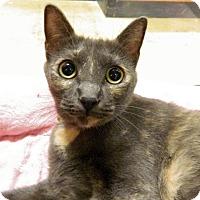 Adopt A Pet :: Moxie - The Colony, TX