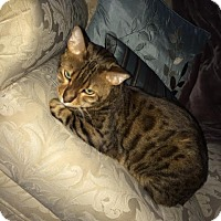 Adopt A Pet :: Chester - Dallas, TX