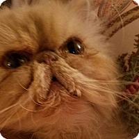 Adopt A Pet :: Murphy - Columbus, OH