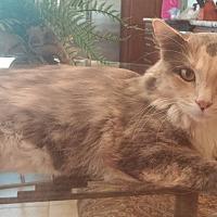 Adopt A Pet :: Glynda - Chandler, AZ
