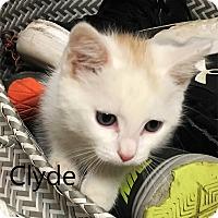 Adopt A Pet :: Clyde - N. Billerica, MA