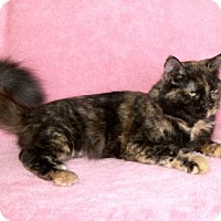 Adopt A Pet :: Savannah - Hamilton, ON