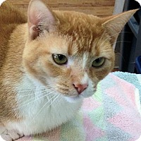 Adopt A Pet :: Kiara - Manchester, MO